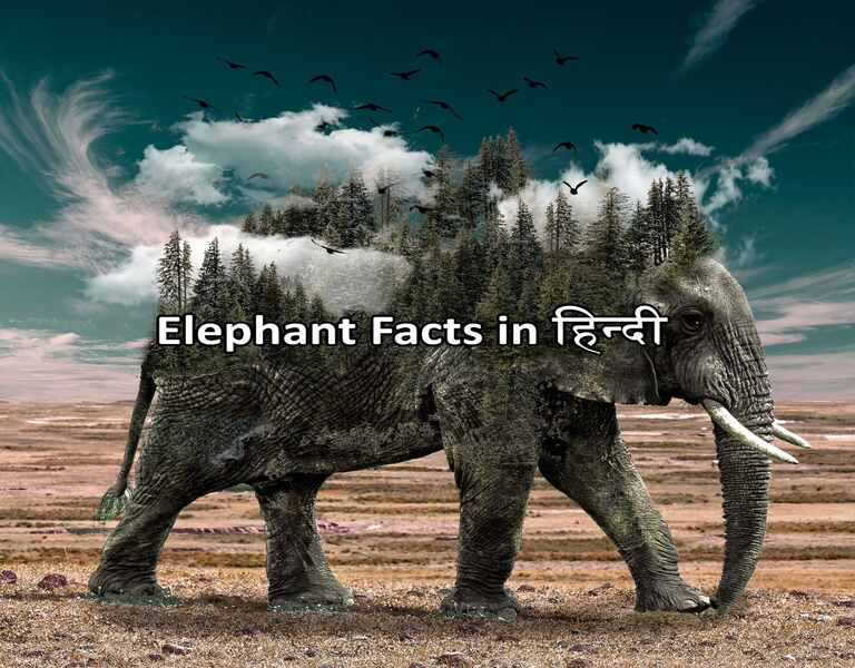 Elephant Facts in हिन्दी