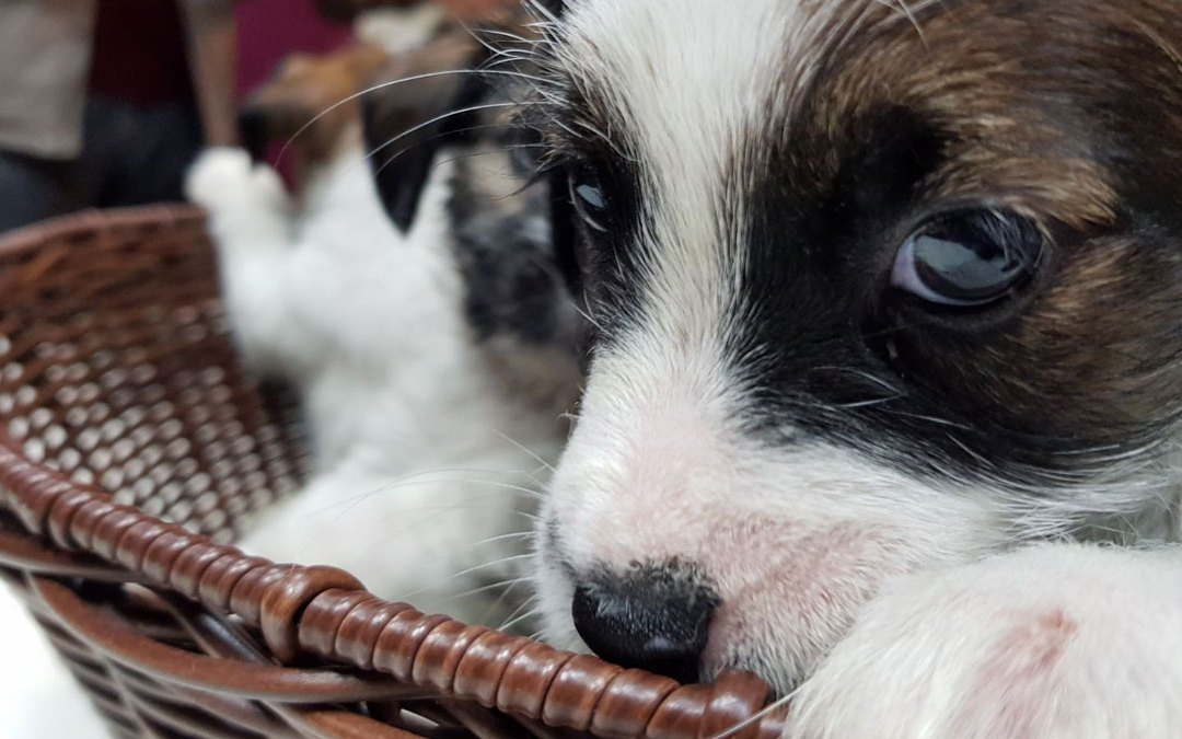 Las mil maneras de disfrutar del servicio de un perro de alerta médica