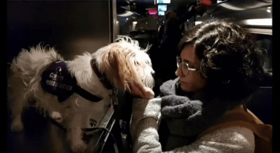 ¿En que puede ayudarme un perro de alerta médica?
