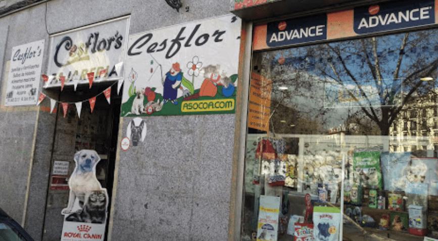 Cesflor's