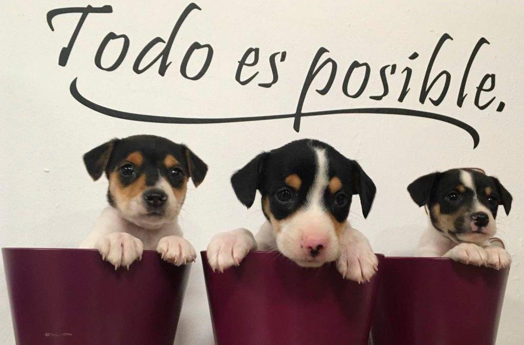 Campaña de Crowfunding Solidario: gastos veterinarios de nuestros cachorros