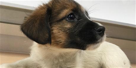 Fochert dona comida para nuestros cachorros en formación