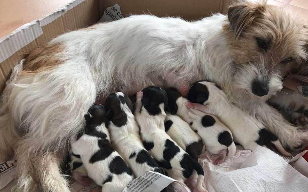 Bienvenida a la nueva camada de cachorros CANEM