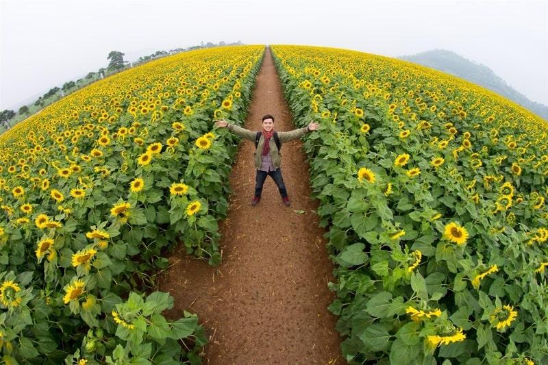 Chắc chắn bạn sẽ bị choáng ngợp trước vẻ đẹp và quy mô của cánh đồng hoa này