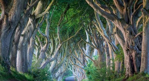 Đường mòn ở Ireland