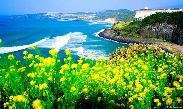 Đảo Jeju là đảo lớn nhất ở Hàn Quốc. Là điểm du lịch nổi tiếng nhất Hàn Quốc.