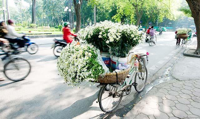 Hoa cúc xuống phố