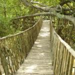 Kinh nghiệm du lịch Buôn Đôn - Điểm đến đặc biệt của núi rừng Đắk Lắk