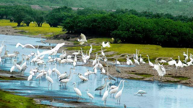 Vườn Quốc gia Xuân Thủy - Một trong 6 địa điểm du lịch nổi tiếng ở Nam Định