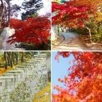 Mùa thu lãng mạn và nên thơ ở Seoul