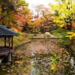 Cảnh đẹp khiến vạn người mê ở Hàn Quốc khi thu sang