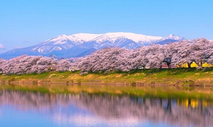 Lên lịch ngắm hoa anh đào tuyệt đẹp ở Tohoku, Nhật Bản