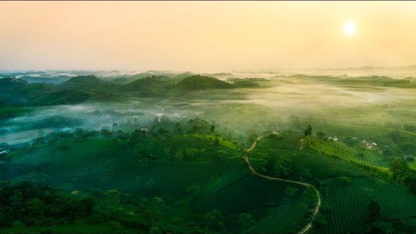 Ngây ngất với khung cảnh tuyệt đẹp ở đồi chè Long Cốc, Phú Thọ
