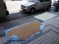 Rice and soybeans drying in the street!