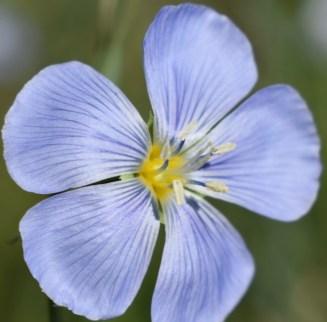 other purple flower