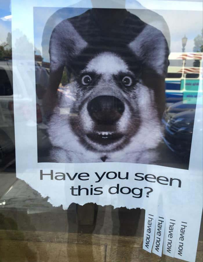 Have You Seen This Dog :