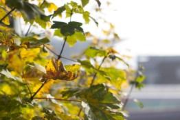 Blätter im Vordergrund vom Hafen