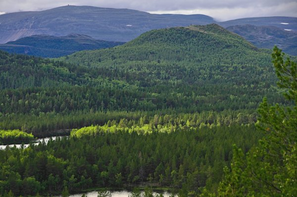 Between Porsangmoen and Karasjohka, Troms og Finnmark, Norway - ...behind every picture, there is a story...