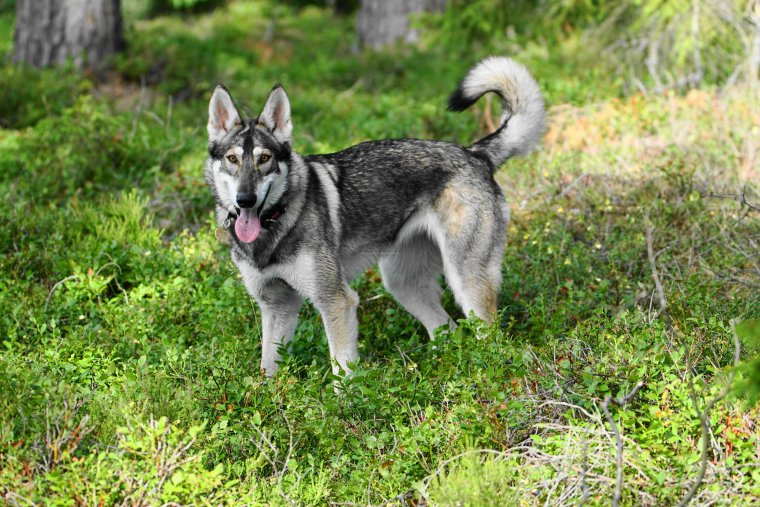Northern Inuit, Lake Anghultasjon, Near Norrhult, Kronoberg County, Sweden - ...behind every picture, there is a story...