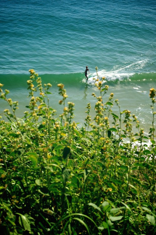 Harrison Roach, Rhythm, Noosa, art, fine art, prints, surfing photography, Surf, wave, Duncan Macfarlane Photography, Duncan, Surfing, Surf, Photography, Duncanm, Surf Photography, Hang ten, Logging, Longboarding, Flowers, waves, Ocean, Duncan Macfarlane,