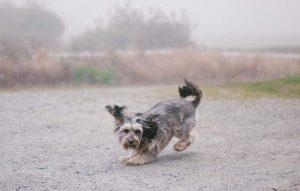 Having fun in the fog