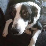 Just look at Jacob now - happy and content - a loving family to call his own x