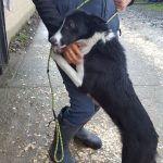 Judy - a stray to the Louth County Pound