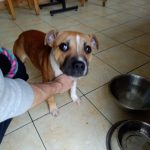 Daisy2 (1)