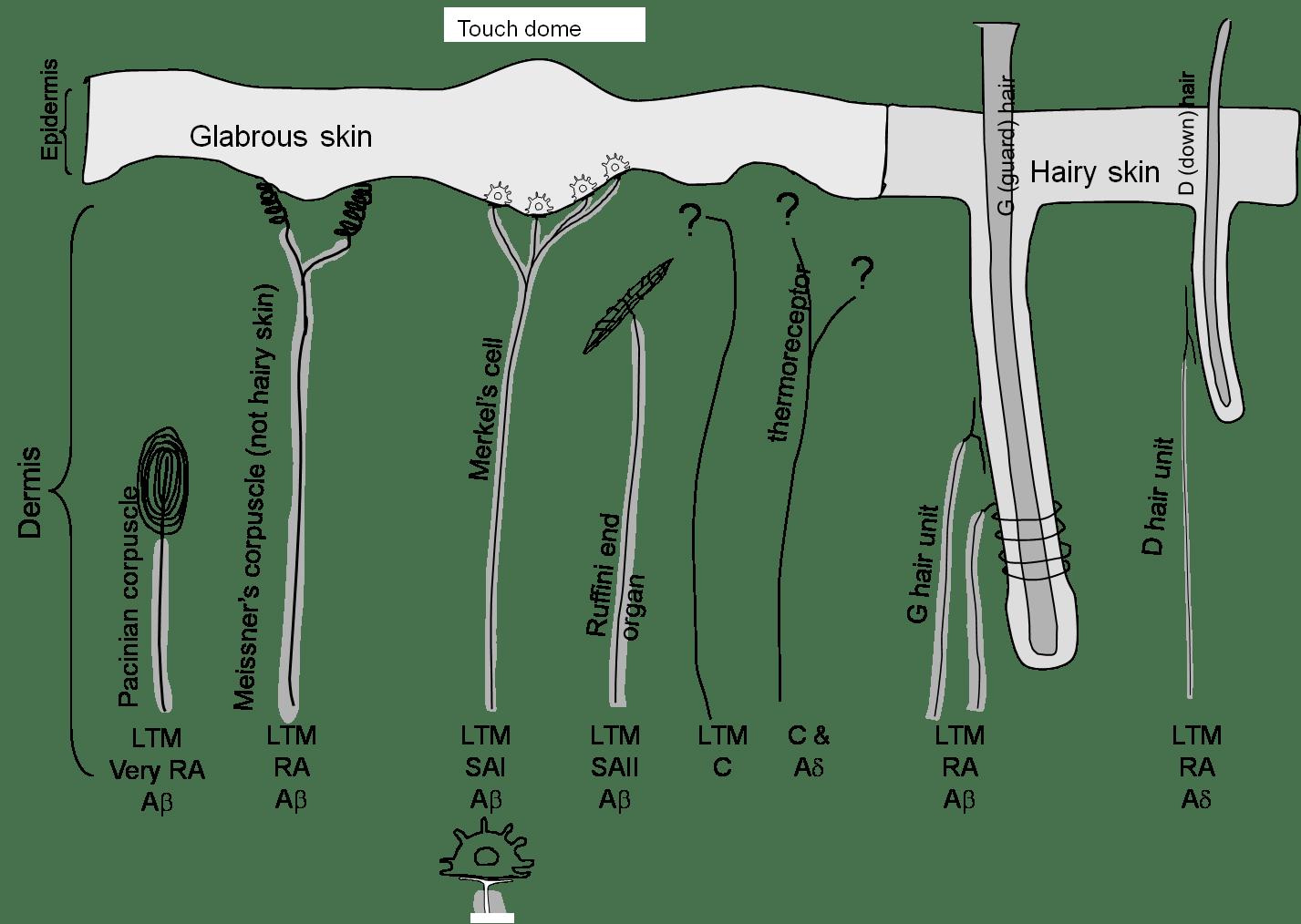Fibre types