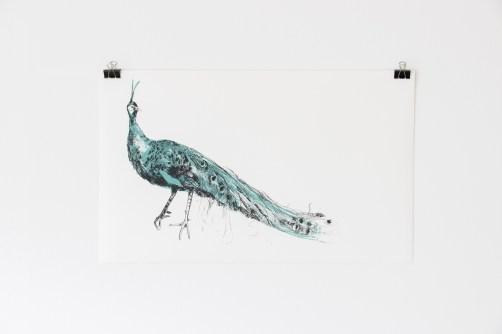 'Green Peafowl' by Lara Scouller