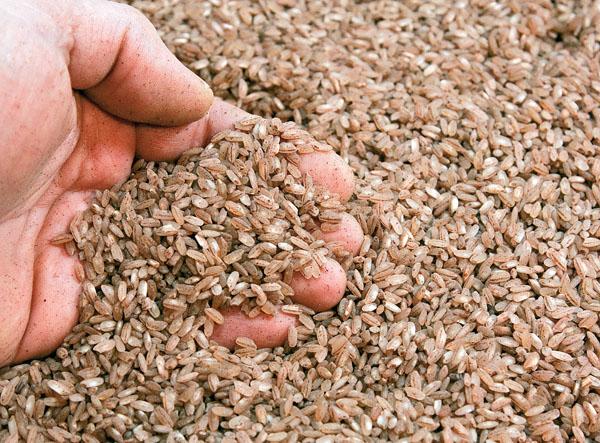 рис девзира для плова по-фергански