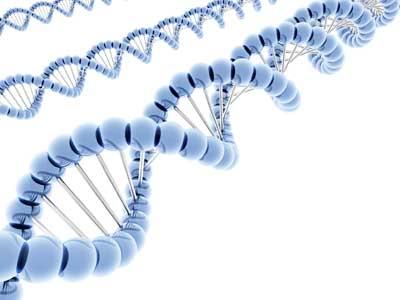 Rekayasa Genetika  Sceonity