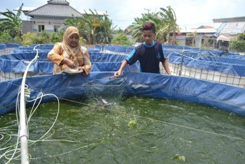 cara pemberian pakan ikan lele