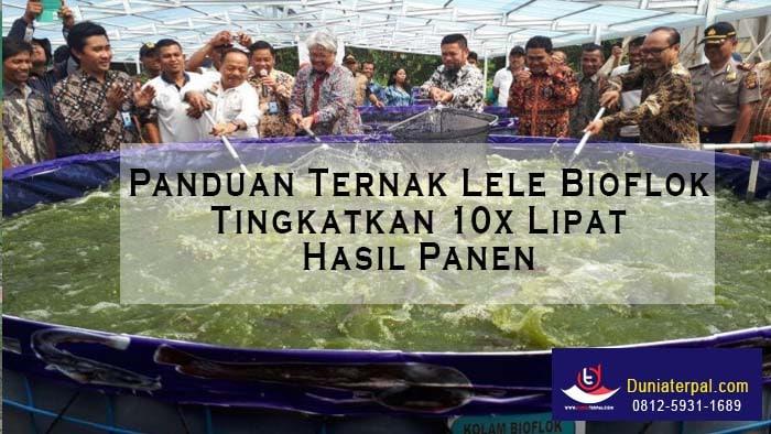 Panduan Ternak Lele Bioflok Tingkatkan 10x Lipat Hasil Panen