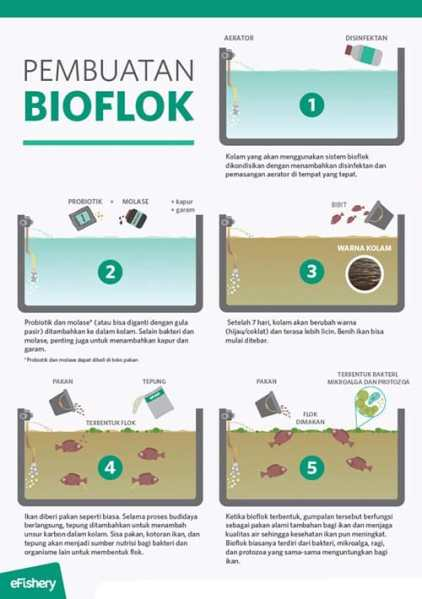 pembuatan kolam terpal bioflok