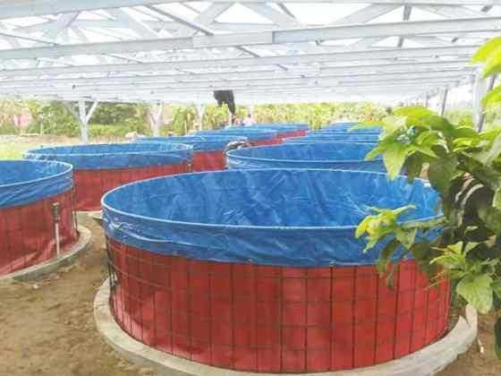 cara membuat kolam terpal ikan nila
