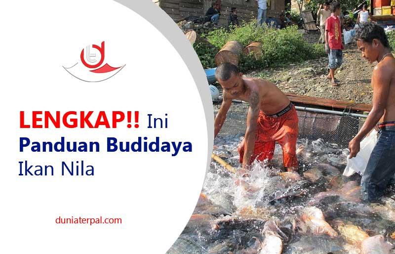 Budidaya Ikan Nila Terpal - InfoAkuakultur.com