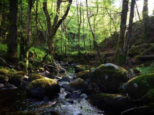 Birnam Wood