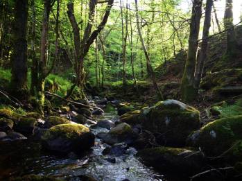 Birnam Woods, Birnam & Dunkeld