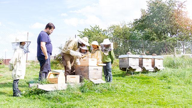 Schulklasse bei den Dunklen Bienen