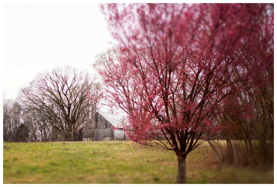 calvert county barns-20