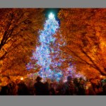 Chicago Christmas Treeby Robert Mullenix / Dunwanderin Digital Studio