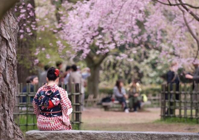 japonya kyoto sakura zamani parkta kitap okuyan geysa