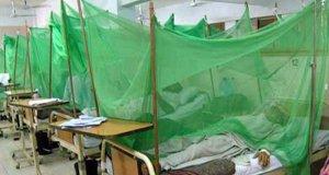 ڈینگی سے 1500 سے زائد افراد متاثر