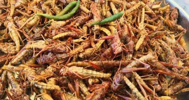 فصلیں کھانے آنیوالا ٹڈی دل انسان کیلئے بہترین خوراک قرار