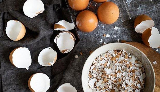 انڈے کے چھلکے اور تربوز کے بیج میں چھپے فوائد