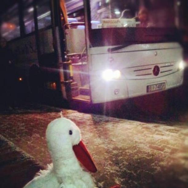 Bocian w podróży autobusem PKS w Polsce