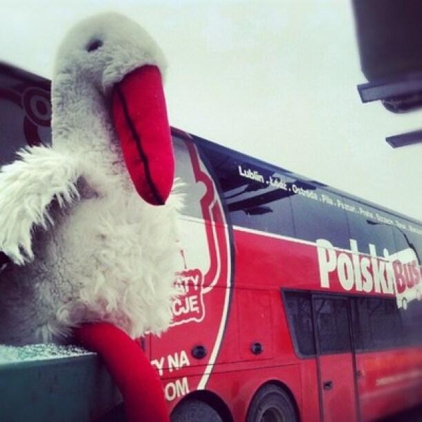 Bocian w podróży PolskiBus.com autobusem po Polsce