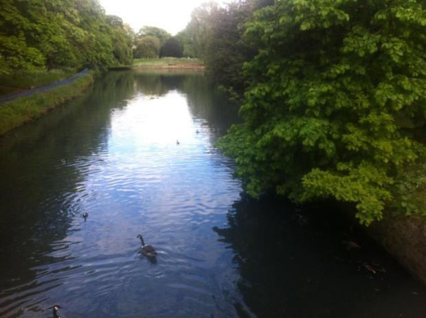 londyn-pymmes-park-edmonton-jezioro-park-w-londynie-przyroda-angielski