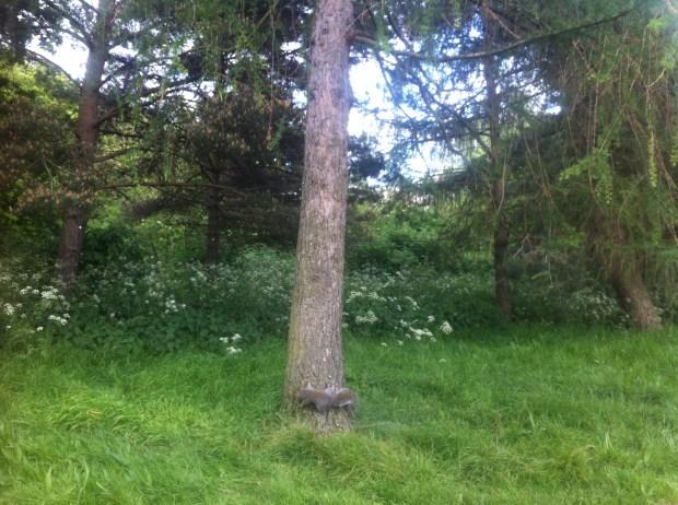 londyn-pymmes-park-edmonton-szara-wiewiorka